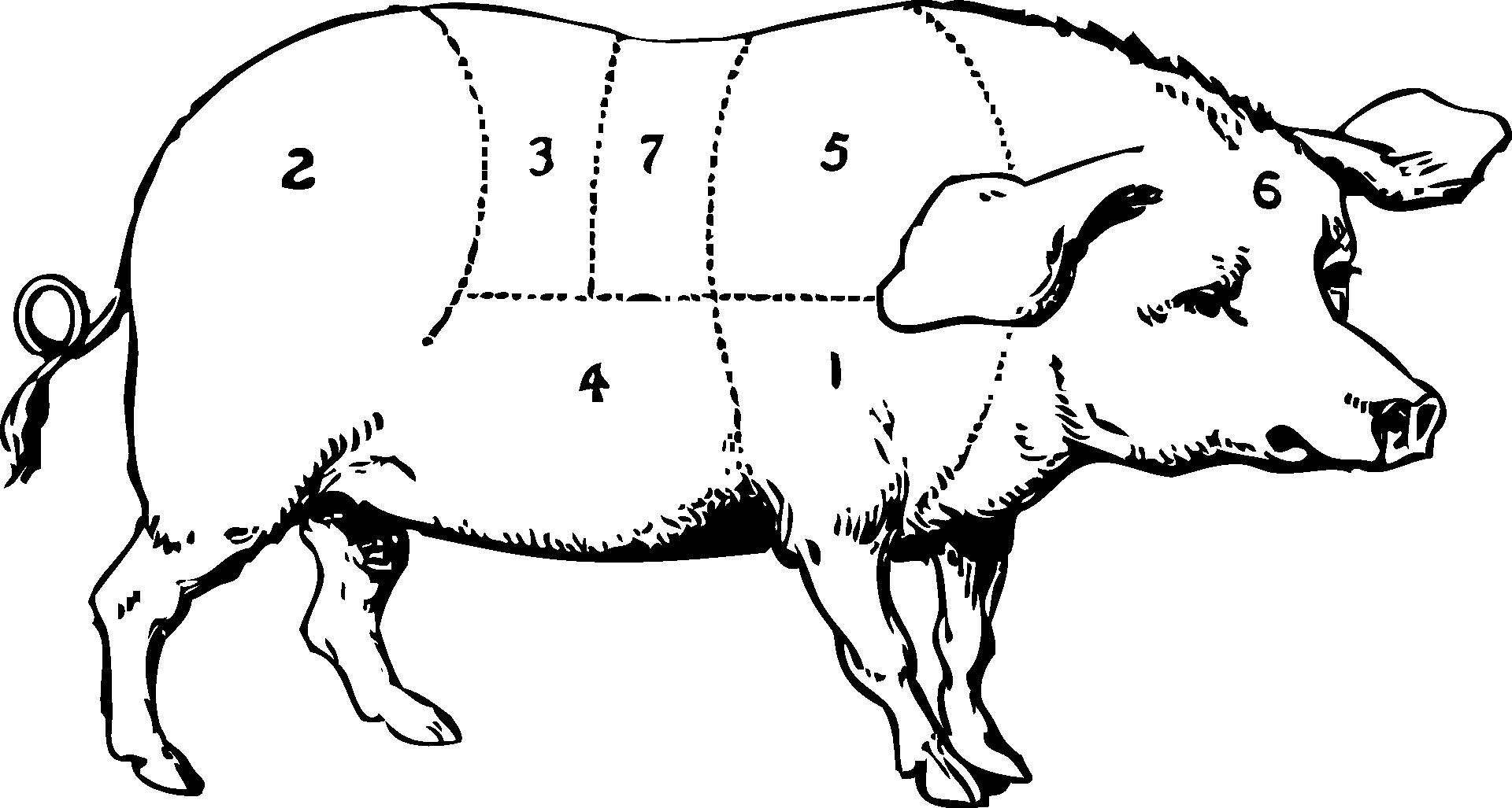 pig-47252