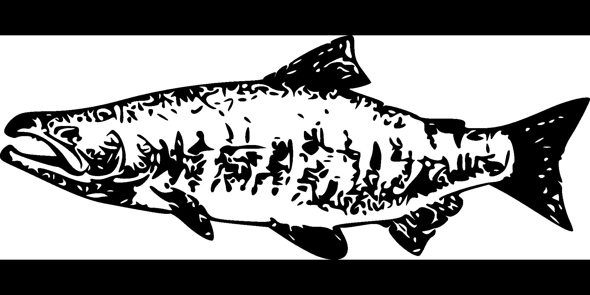 salmon-28935